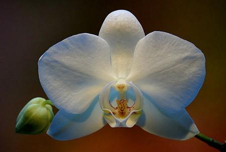 {OrchideenII} Foto: Hans-Georg Schemmann